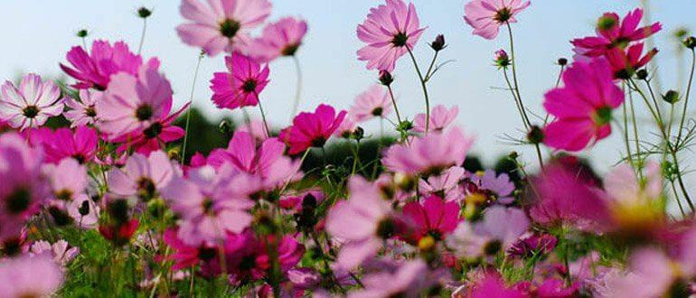 Çiçekçilerin çalışma saatleri