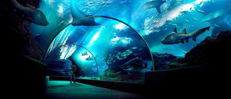 Sea Life Akvaryum çalışma saatleri